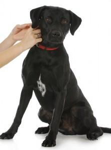 Hundehalsbänder mit QR-Code bieten zusätzlichen Schutz.